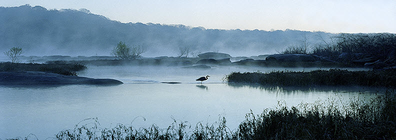 Great Blue Heron on a Misty James River